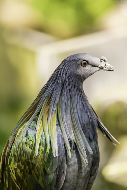 Bird, Nature, Wildlife, Feather, Animal, Portrait