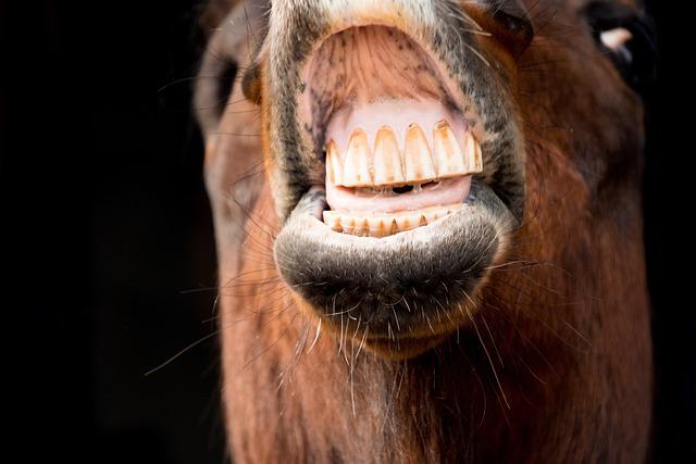 Portrait, Face, Animal, Horse