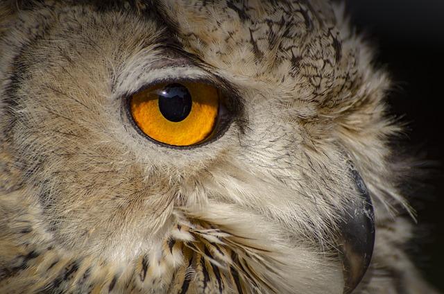 Owl, Wildlife, Bird, Animal, Animal Portrait