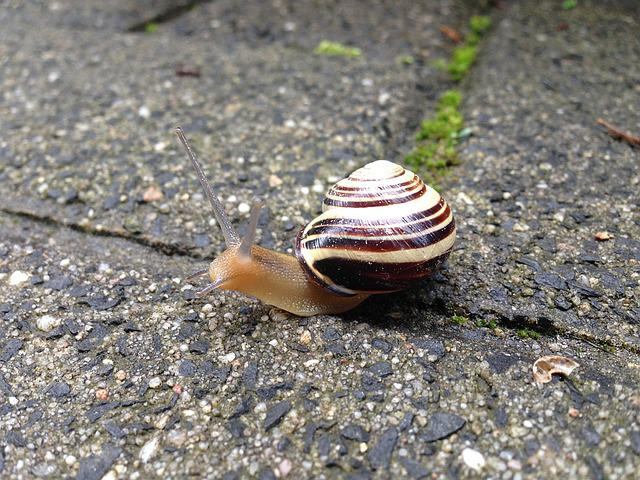 Snail, Paving Stone, Animal, Shell, Probe