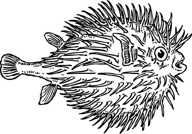 Blow, Fish, Sea, Animal, Puffer, Marine, Blowfish