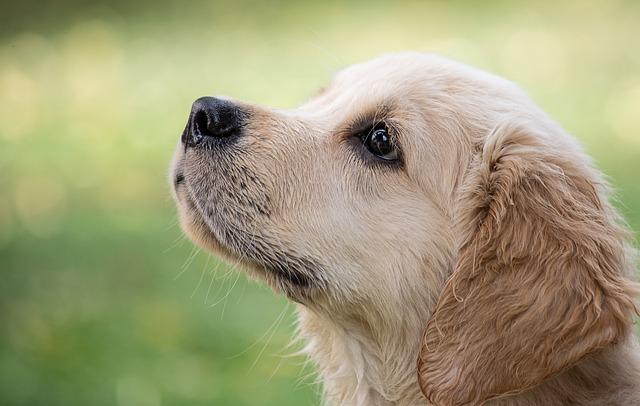 Dog, Mammal, Animal, Animal World, Puppy, Cute