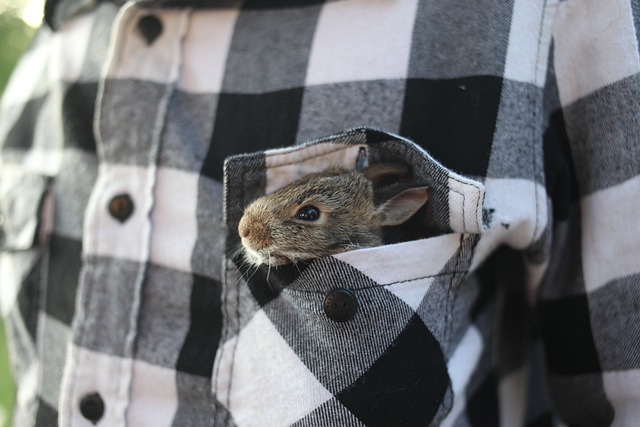 Rabbit, Bunny, Animal, Cute, Nature, Ears, Wildlife