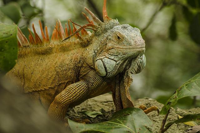 Nature, Animal, Wildlife, Reptile, Lizard