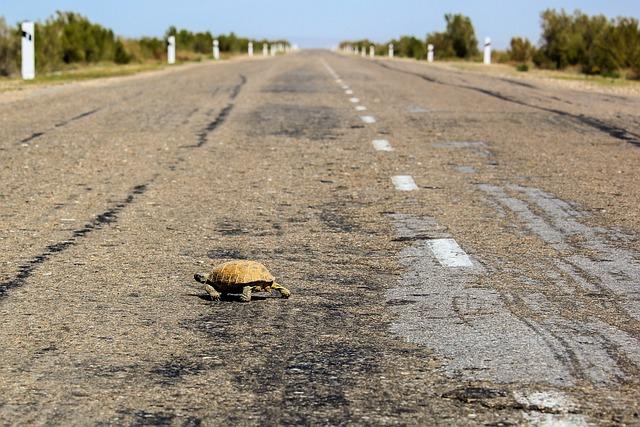 Tortoise, Road, Shell, Animals, Reptile, Turtle, Animal