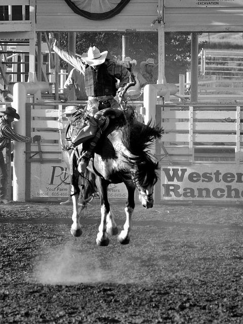 Horse, Rodeo, Cowboy, Western, Animal, Riding, Rider