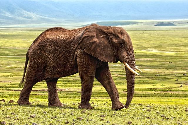 Elephant, Safari, Animal, Defence, Africa, Nature
