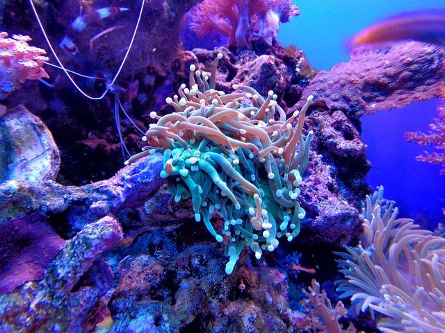 Coral, Anemone, Cay, Aquarium, Sea, Fish, Animal