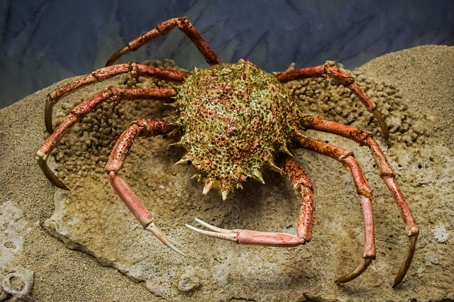 Crab, Animal, Sea, Marine, Environmental Museum