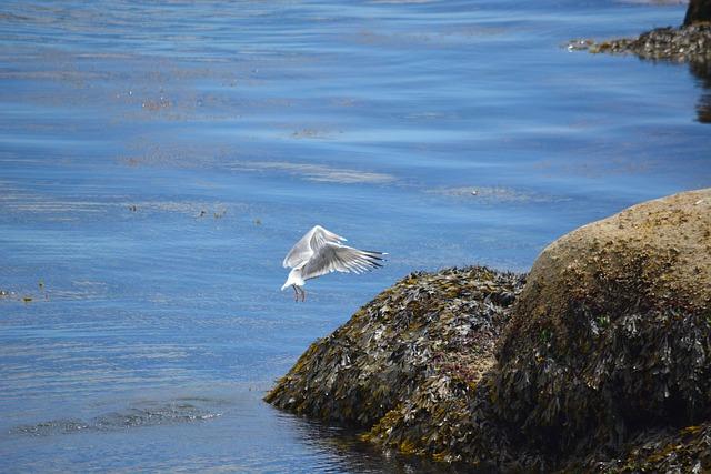 Bird, Gull, Animal, Seagull, Sea, Nature, Ornithology