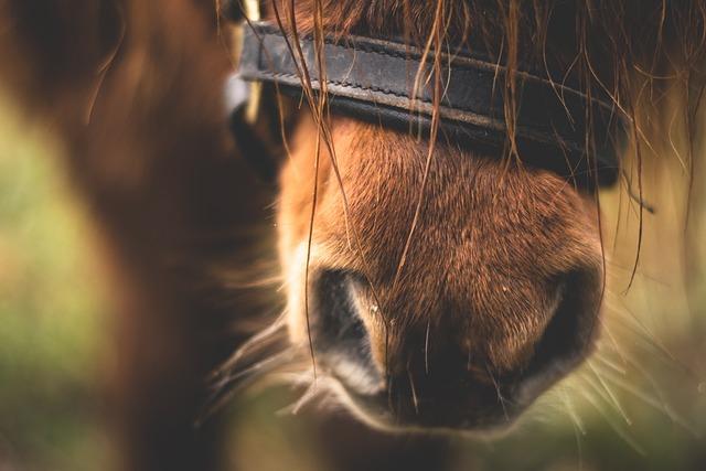 Horse, Pony, Animal, Cute, Sweet, Fur, Shetland Pony