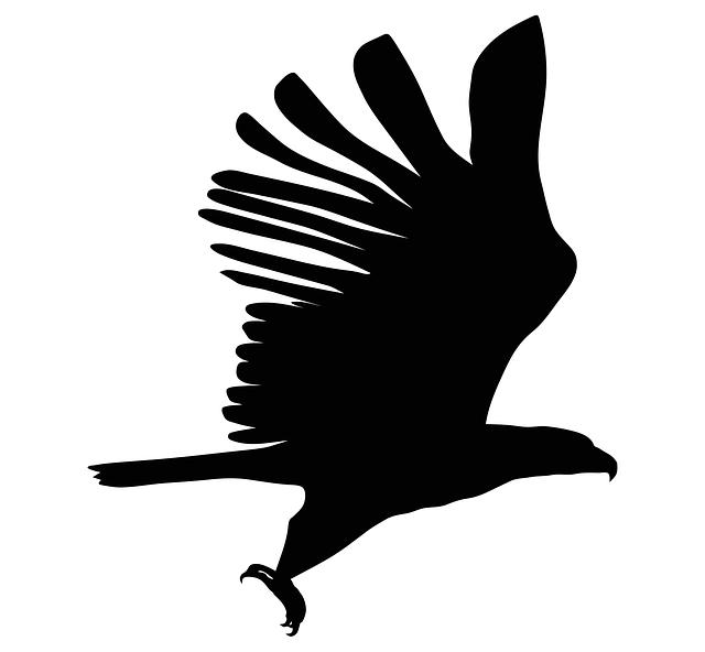 Eagle, Silhouette, Bird, Symbol, Design, Animal, Sign