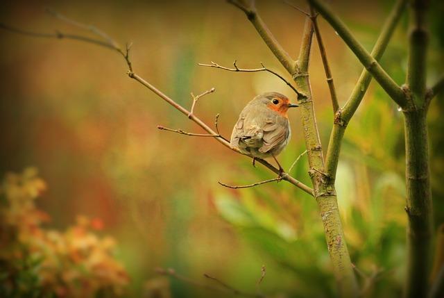 Robin, Bird, Animal, Songbird, Close Up, Sitting