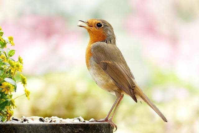 Animal, Bird, Songbird, Small, Robin