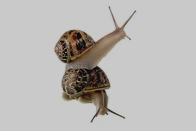 Snail, Gastropod, Shell, Animal