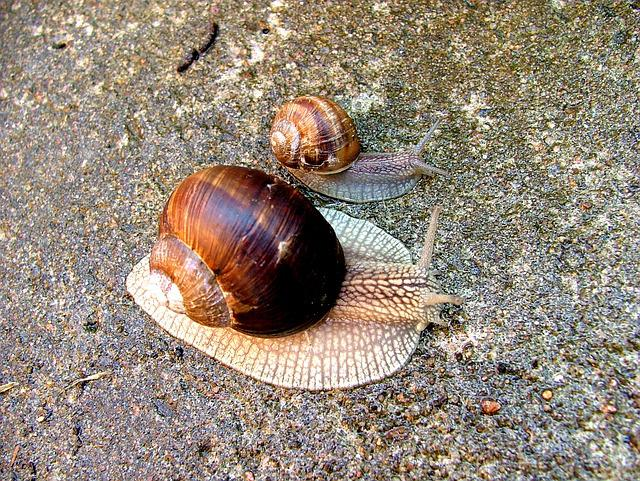 Worm, Snail, Conch, Nature, Animal, Snail Shell
