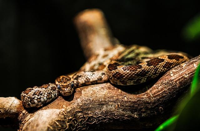 Snake, Zoo, Animal