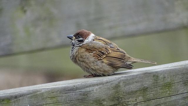 New, Wildlife, Nature, Animal, Outdoors, Sparrow