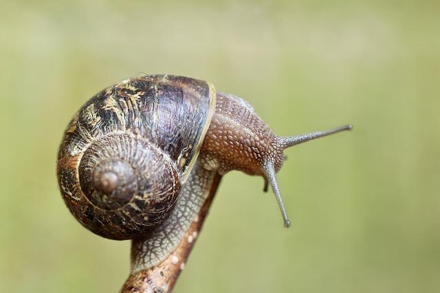 Snail, Shell, Wirbellos, Probe, Spiral, Reptile, Animal