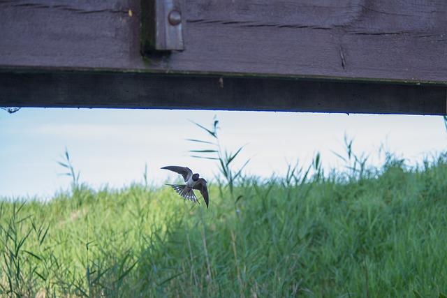 Swallow, Bird, Flight, Spring, Nature, Animal, Wild