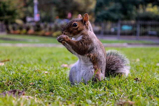 Squirrel, Landscape, Nature, Eat, Nut, Animal