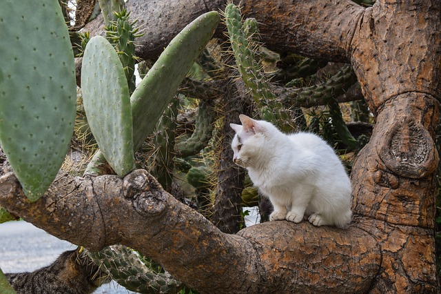 Cat, Stray, Young, Sitting, Prickly Pear, Animal, Cute