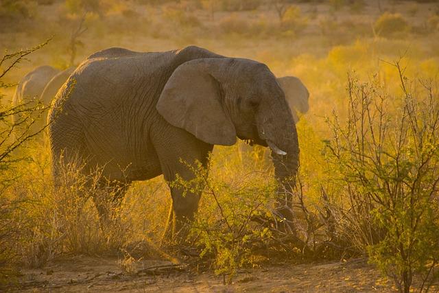 Namibia, Sunset, Elephant, Animal