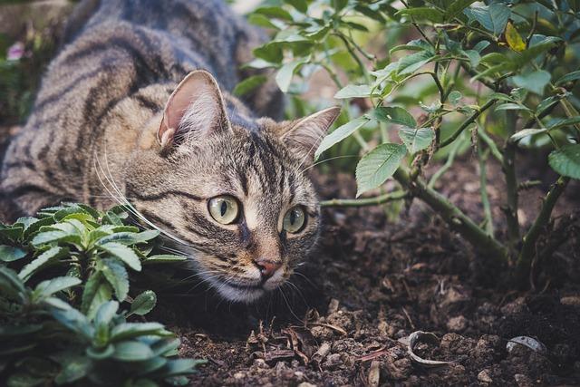 Cat, Pet, Animal, Tabby Cat, Domestic Cat, Feline