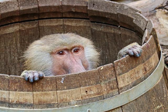 Monkey, Baboon, Zoo, Animal, Tiergarten, Nature