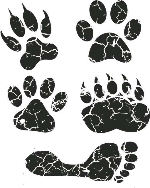 Paw Print, Paw, Foot Prints, Footprint, Animal Tracks