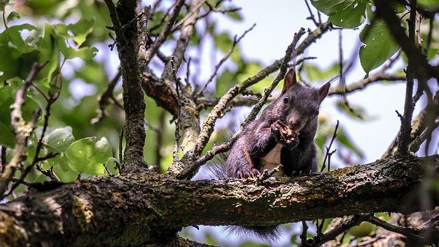 Squirrel, Animal, Eat, Tree, Nature, Leaves