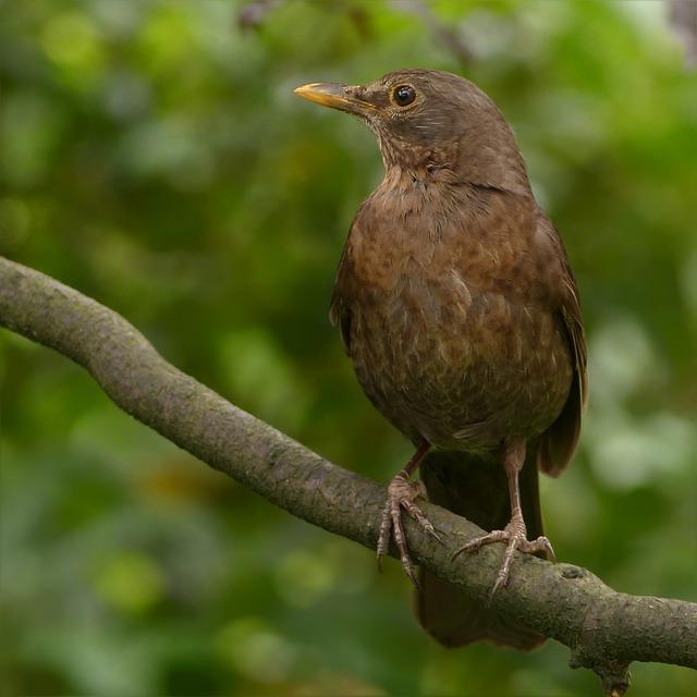 Animal, Bird, Blackbird, Turdus Merula, Sitting, Branch