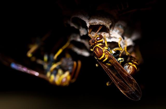 Wasp, Insect, Animal, Nature, Macro, Bee, Honey, Wasps