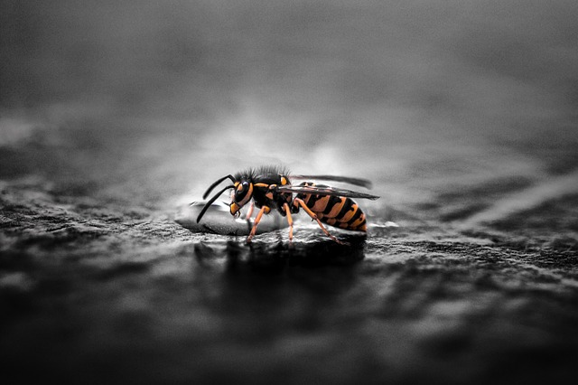 German Wasp, Insect, Animal, Animal World, Wasps