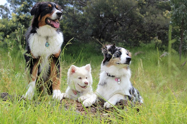 Dogs, Puppies, Watching, Outside, Park, Puppy, Animal