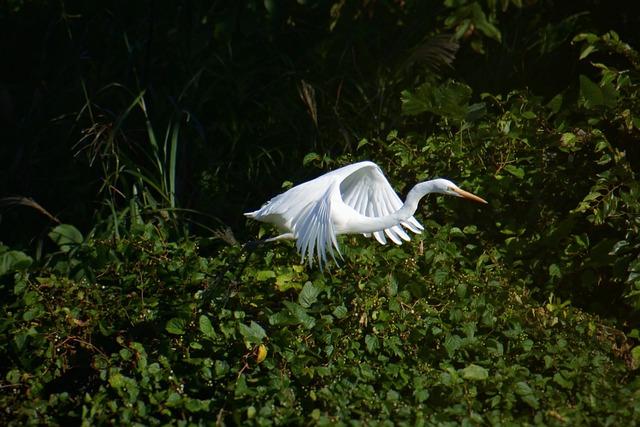 Animal, River, Waterside, Wild Birds, Egret