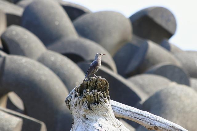 Animal, Beach, Wave Off Block, Driftwood, Little Bird