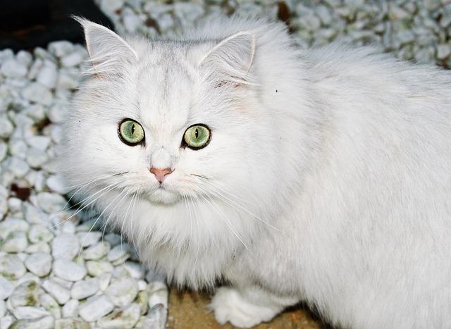 Cat, Leipzig, White, Predator, Animal, Eyes, Beauty