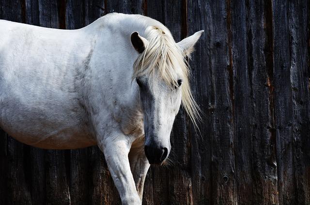 Horse, Mold, Reiterhof, Animal, White Horse, Nature