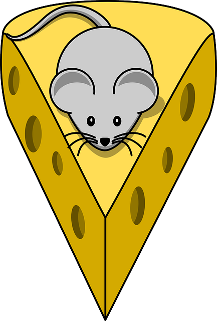 Cheese, Mouse, Mammal, Rodent, Gnawer, White, Animal