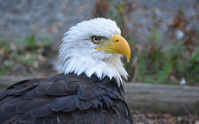 Bird, Wildlife, Nature, Animal, Feather, Eagle