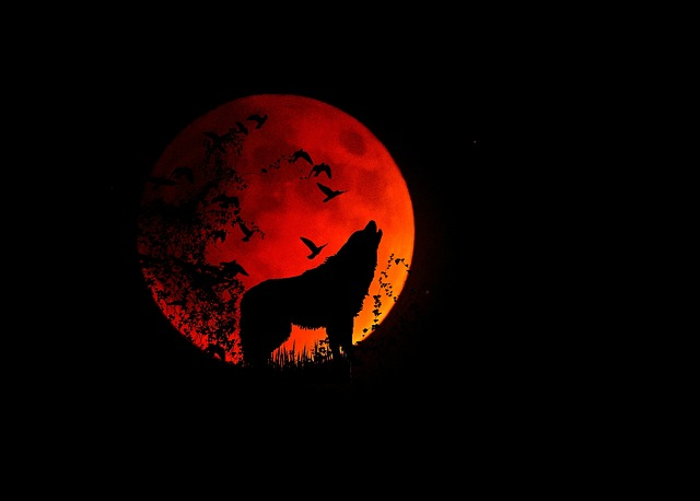 Full Moon, Moon, Wolf, Animal, Mystical, Night, Howl