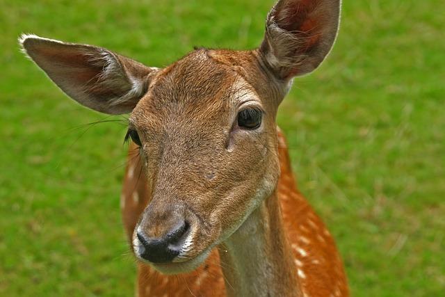 Mammal, Grass, Animal, Animal World, Meadow, Nature