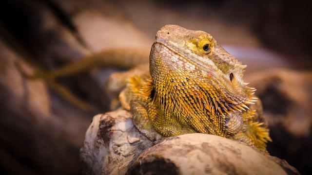 Nature, Animal World, Animal, Lizard, Reptile