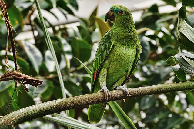 Nature, Bird, Parrot, Animal World, Animal, Wing