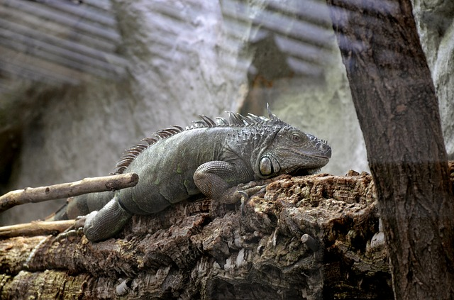 Reptile, Nature, Lizard, Animal, Animal World, Wild