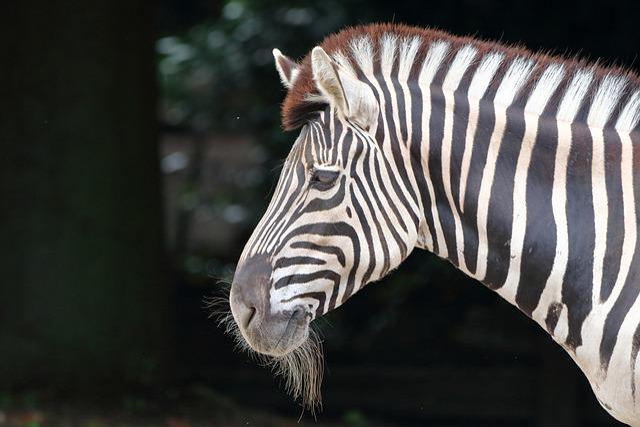 Zebra, Animal, Animal World, Mammal