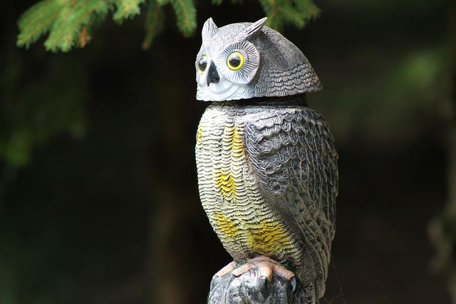Nature, Animal World, Bird, Animal, Owl, Artwork, Art