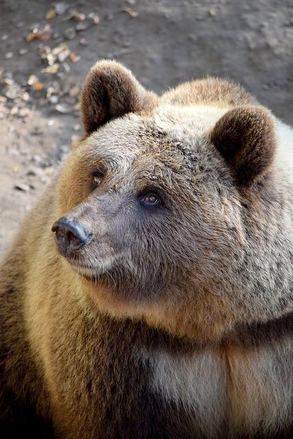 Bear, Animal World, Wildlife Park, Bear Enclosure