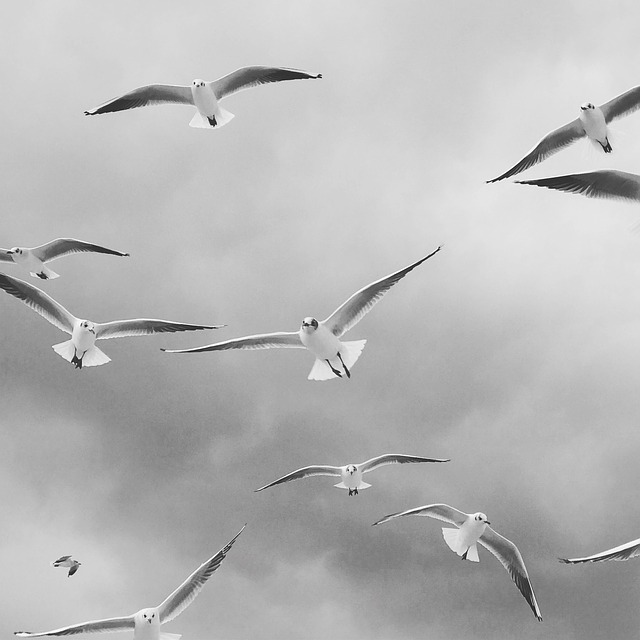 Bird, Seagull, Flight, Nature, Animal World, Gulls, Fly